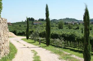 Amarone - Rubinelli Vajol