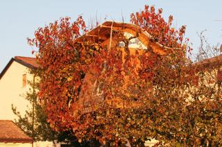 Produzione vini della Valpolicella classica: amarone, ripasso, recioto