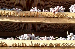 Produzione vini della Valpolicella